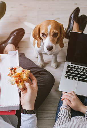 People working and eating pizza with a dog watching